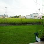 裏庭の芝生。手前にゴーヤのグリーンカーテン。庭の後ろは緑の稲田。