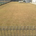 2015年12月12日の芝生。かなり冬枯れして茶色くなった。
