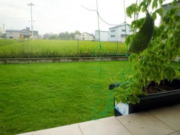 芝生。少し角度を変えて撮影。芝は長めでややモサモサしている。