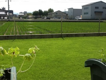 2012年の裏庭の芝生。手前にプランター。奥に水田。