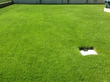 2012年の庭の芝生。芝生は平坦で濃い緑。手前に雨水枡。