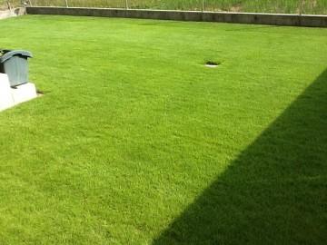 芝生を違う角度から撮影。夏の日差しに芝生の緑が美しい。