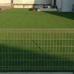 朝の芝刈り後の裏庭の芝生。緑が濃い。奥に赤い芝刈り機。