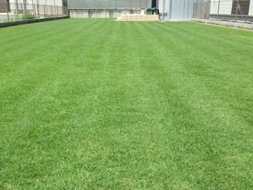 広い芝生。夏の日差しに芝生の緑が映えている。