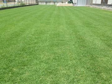 昼頃の裏庭の芝生。夏の日差しに芝生の緑が映えている。