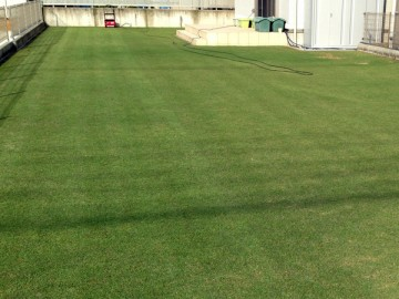 芝刈りの途中。左側が芝刈り後、右側が芝刈り前。