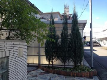 玄関の前のコニファーとシマトネリコ。晴れた青空を背景に。
