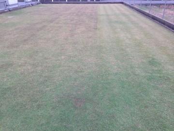 穂刈りの途中。右側が穂刈り後、左側が穂刈り前。