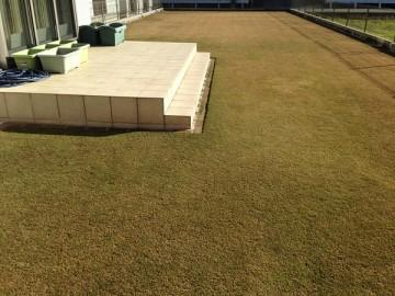 2015年12月20日の裏庭の芝生。西側から撮影すると多少は緑。