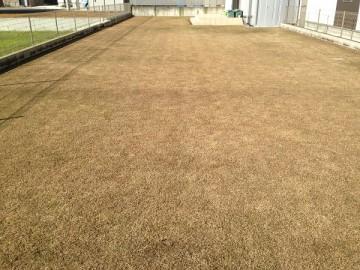 2015年12月20日の裏庭の芝生。東側から撮影すると完全に茶色。