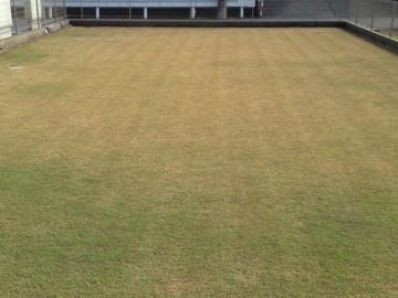 その後の2013年に芝生を拡張したエリア、約166 m2。