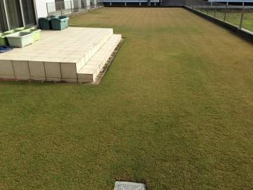 現在の芝生の全景。合計で約234 m<sup>2</sup>。約3.4倍の面積。