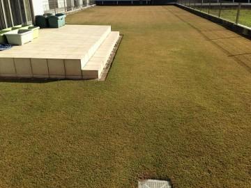 庭の西側の端から見ると場所によっては、まだ緑を保っている。