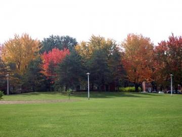 緑の芝生と紅葉をむかえた公園の樹木。もう少し近くで撮影。