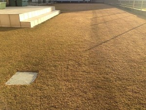 2016年1月10日の芝生。西側からの撮影。芝生は冬枯れで茶色くなっている。