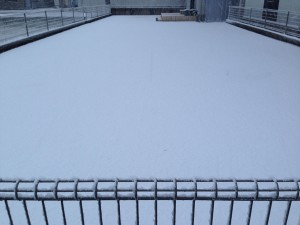 1月19日の裏庭の芝生。数センチの雪が積もっている。