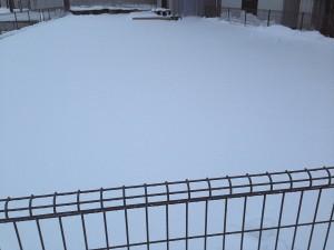 1月20日の裏庭の芝生。十数センチの雪が積もっている。