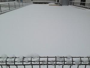 2016年1月24日、雪に覆われた裏庭の芝生。