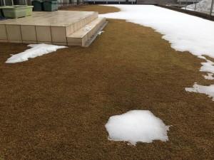 2016年1月30日の裏庭の芝生。雪は大分融けた。西側から撮影。