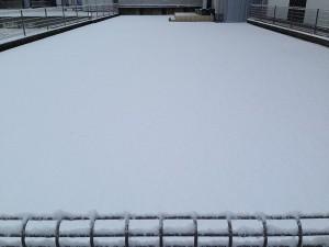 2016年2月7日、雪に覆われた裏庭の芝生。東側から撮影。