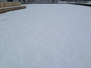 2016年2月7日、雪に覆われた裏庭の芝生。西側から撮影。