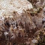 庭の隅の雨水枡のまわりに出来た霜柱。近くで撮影。