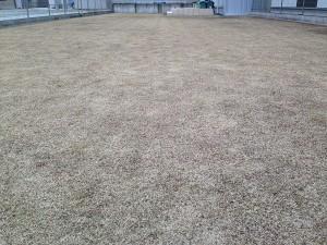 2016年2月13日の裏庭の芝生。東側から撮影。