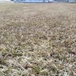 2016年2月13日の裏庭の芝生。近接撮影。