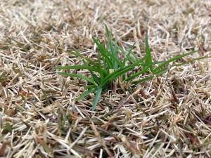 庭に生えた緑の雑草。