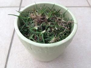 ゴミ箱代わりの植木鉢に一杯の雑草。