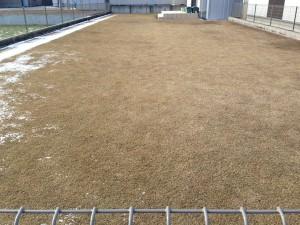 2016年2月25日の芝生。雪がほとんどなくなった。