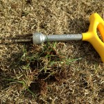 根元の土と一緒に根こそぎ抜かれた雑草。
