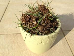 うす緑色の植木鉢に一杯の雑草。