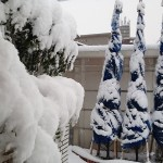 2016年3月1日。玄関前のコニファーとシマトネリコも雪の下。