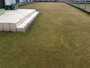 芝生が緑になってきました。