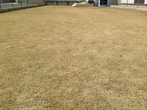 2016年3月21日の芝生。作業前。