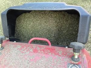 集草箱の中の刈り芝。2杯目。