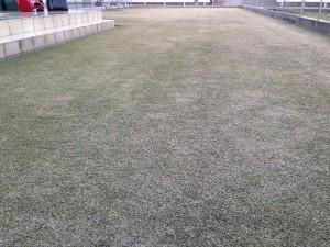 作業後の裏庭の芝生。西側から撮影。