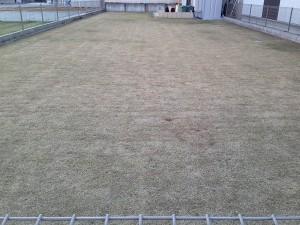 作業後の裏庭の芝生。東側から撮影。