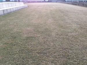 2016年3月26日の芝生。早朝6時作業開始前の芝生。
