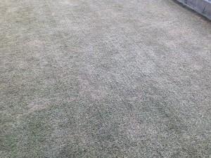バーチカルカットの途中の芝生。少し拡大。