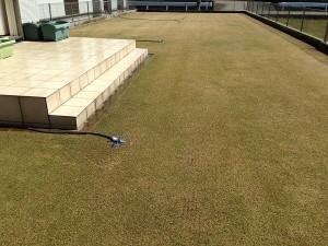 芝生の上のスプリンクラー。西側から撮影。