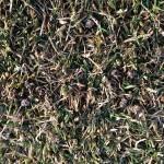 芝生の上に残るイデコンポの粒。