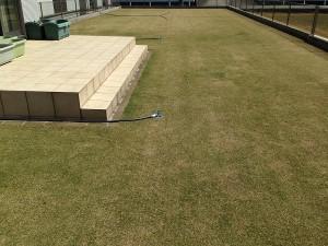 芝生とスプリンクラー。西側から。