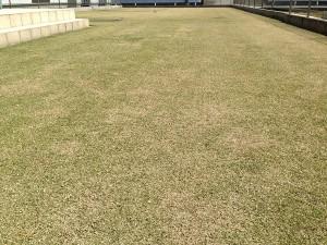 芝生とスプリンクラー。西側から低い目線で。