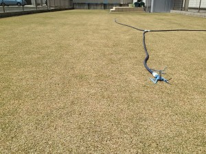 芝生とスプリンクラー。東側から低い目線で。
