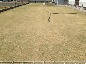 芝生とスプリンクラー。東側から。