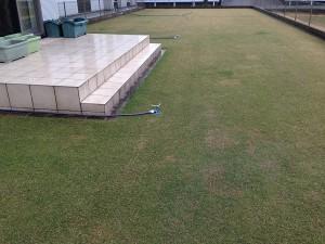 2016年4月4日の芝生。雨が降っている。