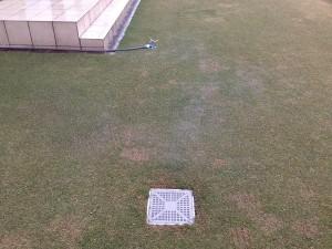 芝生に出来た水たまり。
