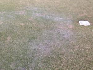 芝生に出来た水たまり。東側から。